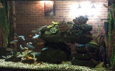 Нажмите на изображение для увеличения Название: Аквариум с рыбками.jpg Просмотров: 470 Размер:62.7 Кб ID:1771
